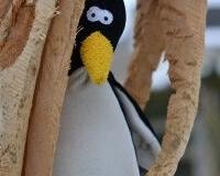 Pingu4